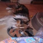 Le 25 mars de cette année, Dako est victime d'un gros coup de pompe... Enfin plutôt de pantoufles