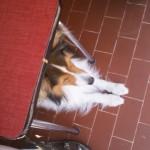 Le 5 août 2011, Dako est en vacances et jamais très loin de sa maîtresse...
